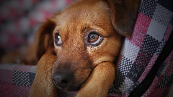 a cute sad dog
