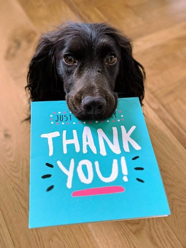 Dog with thank you card